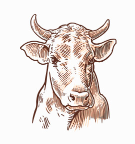 about-cow